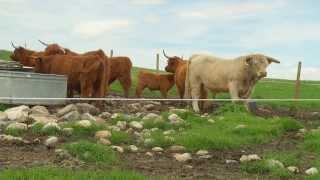 MacKillop Natural Highland Beef