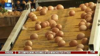 Community Report Features Poultry Farmers In Nigeria Pt. 2