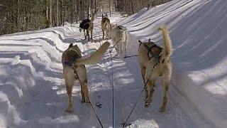 Dog Sledding At North Ridge Ranch - Huntsville, Ontario, Canada