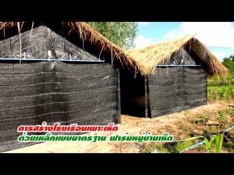 สร้างโรงเรือนเพาะเห็ดแบบมาตรฐาน ฟาร์มหมู่บ้านเห็ด