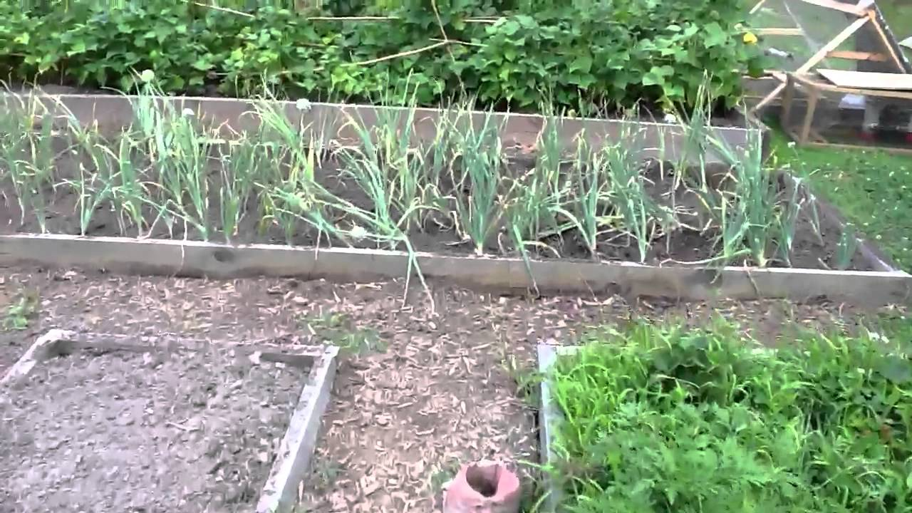 Backyard vegetable garden and farm YouTube