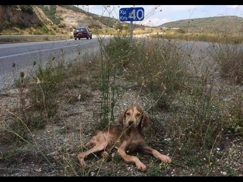 Mangy puppy abandoned in the middle of nowhere is rescued - and he's sooo happy!
