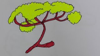 How to draw an acacia tree-acacia flower drawing-draw an african tree step by step