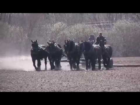 Planting with Horses at Skoien Farm