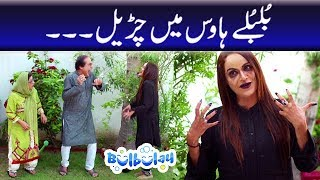 Bulbulay Season 2 | Episode 19 | Ayesha Omer & Nabeel