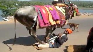 గంగిరెద్దు ఆట - Gangireddu Dance Video - Sankranti Festival - Andhra Pradesh - Telugu News