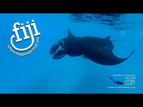 Be inspired by the clear water and the wonderful marine life of Fiji