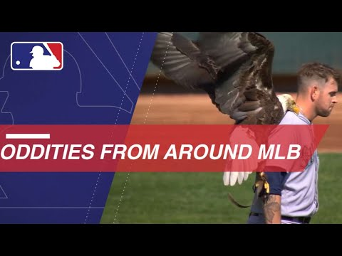 Check Out All the Wild Bloopers From Around Baseball