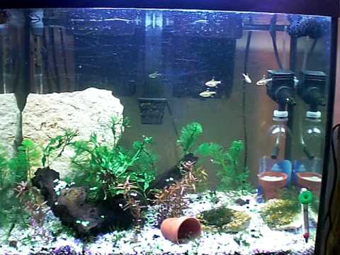 Awesome 37 Gallon Planted Aquarium Youtube