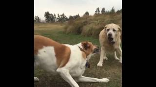 Love watching dogs in slow motion videos, being able to see the det...
