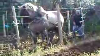 Babbo&Fiore, (il mio cavallo) durante l
