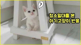 청소밀대를 본 아기고양이 신비반응^^ ( 귀욤주의!!)
