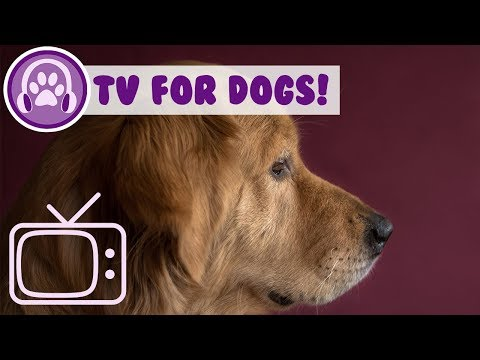 Dog TV! Abstract TV to Calm Dogs with Relaxing Music!