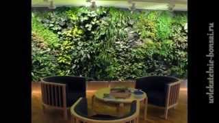Висячие сады Фитодизайн.Вертикальное озеленение ч.1(Сайт: http://uvlekatelnie-bonsai.ru Вторая часть темы в видео здесь: http://youtu.be/8ABgWpUH8jo Фитодизайн и вертикальные сады завое..., 2012-08-10T04:21:25.000Z)