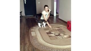 Кошка Муся с повадками собаки