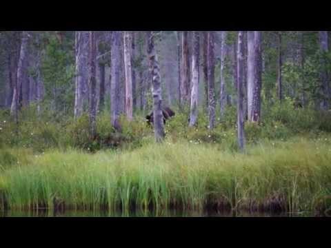 Watching wildlife in Finland HD