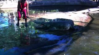 Шоу крокодилов на острове Самуи Таиланд