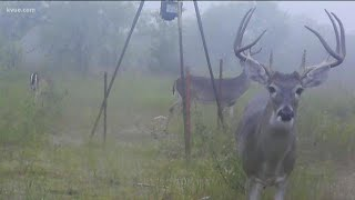 Texas Parks and Wildlife watching out for illegal hunting