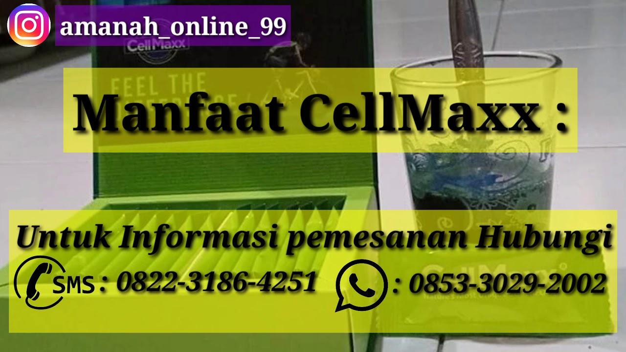 Cellmaxx Obat Apa.? || Harga CellMaxx Asli Original - 085330292002 - YouTube