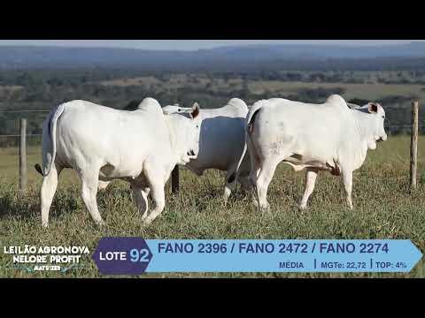 LOTE 92 FANO 2396 X 2472 X 2274