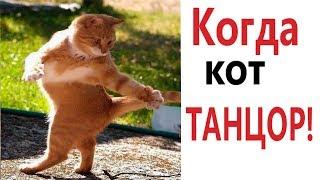 Приколы с котами – КОГДА КОТ ТАНЦОР! Смешные животные! РЖАКА ДО СЛЁЗ - Domi Show