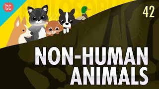 Repeat youtube video Non-Human Animals: Crash Course Philosophy #42