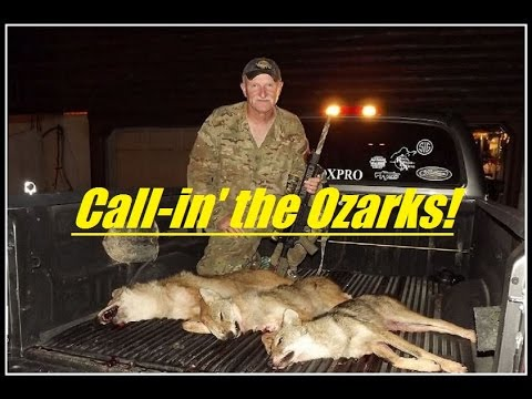 Coyote Hunting in the Ozarks of Missouri, (TRIPLE), (SHORT VERSION), SOLO, number 14.....