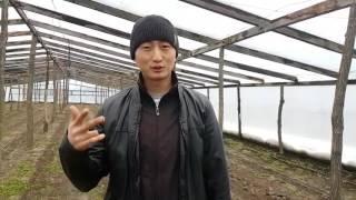 Один миллион рублей в овощах. Какую площадь посадить, чтоб получить 1 млн. Рублей