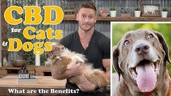 CBD Oil for Dogs, Cats, Pets - What are the Benefits? Treating Anxiety, Pain, Inflammation, Seizures