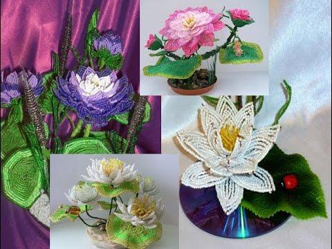 Кувшинка - водяная лилия, нимфея, цветок прекрасный