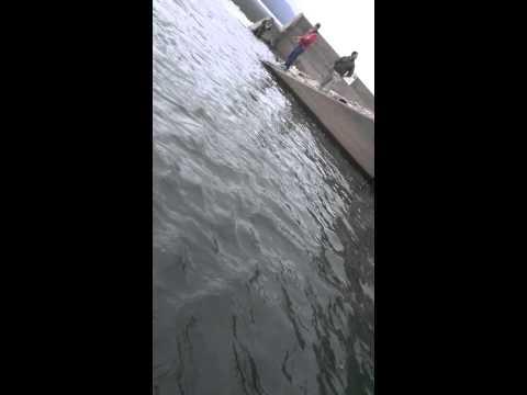 Williamsport pa fishing the dam