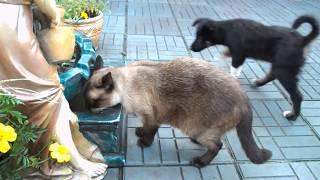 Дворовые животные,собаки коты-жизнь и развлечение