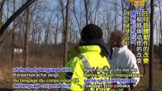 K-9 One Search & Rescue Of Michigan, Usa (1/2)