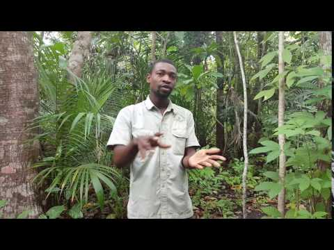 Jozani National Park Guided Tour, Zanzibar Island