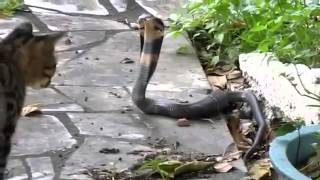 Приколы с кошкамии змеями Жми и смотри! 072
