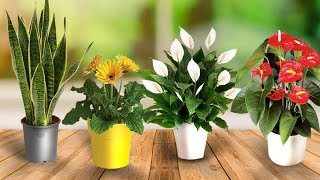 Put This Plants In Your Bedroom And This Will Happen To You