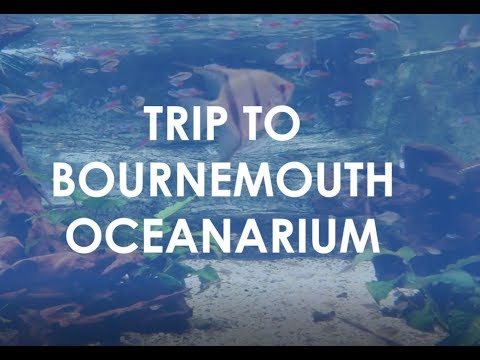 Anglo-Continental Students Trip to Bournemouth Oceanarium