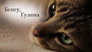 Город кошек: персонаж  Бенгу (Документальный/ США, Турция/ 6+/ в кино с 30 ноября 2017)