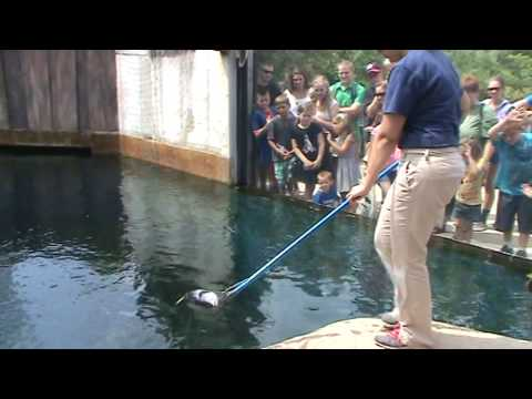 Feeding sharks at the Pittsburgh Zoo & PPG Aquarium