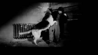 Ко мне, Мухтар (часть 11) Советский художественный фильм