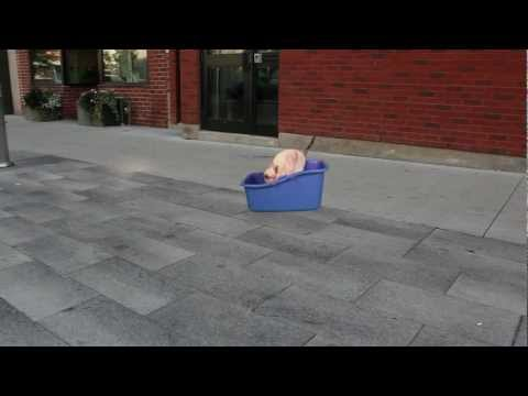 N2 the Talking Cat S2 Ep2 Hover Litter Box