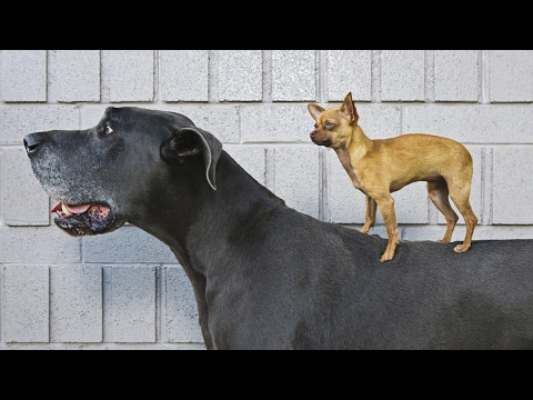 HOLD YOUR LAUGH IF YOU CAN - The funniest DOG & PUPPY videos!