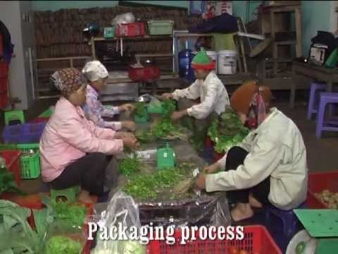Organic Vegetable Production and Marketing (Vietnam)