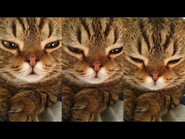 무릎 위에서 스르륵 잠이드는 고양이