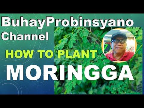 Bonie's Garden 5: Planting Malunggay or moringa tree 1