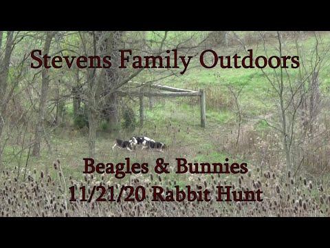 Beagles & Bunnies  11 21 20 – Rabbit Hunt – Stevens Family Outdoors
