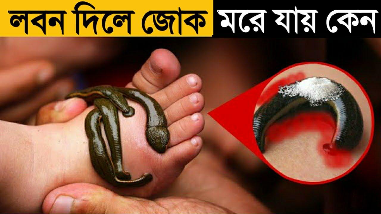 লবন দিলে জোক মরে যায় কেন ? Amazing Facts You Didn't Know About | Top Enigmatic Facts in Bangla