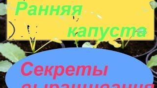 видео Цветная капуста семена Каспер F1(Rijk Zwaan), Часть 39