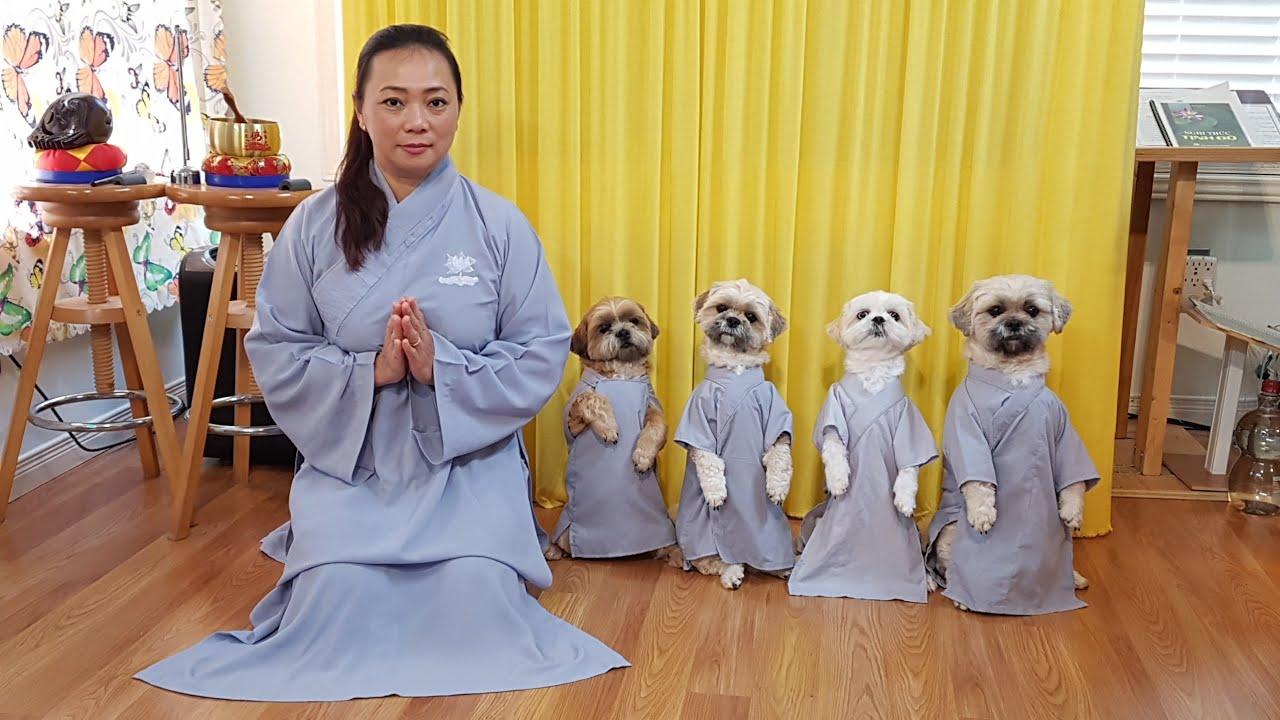 Bốn bé chó cùng Mami lễ ngày vía Bồ Tát Quan Thế Âm 2020