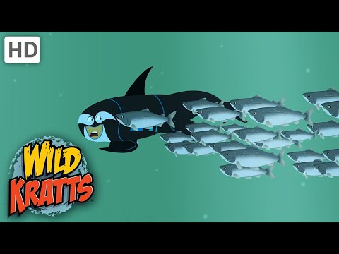 Wild Kratts |Brothers Swim With The Fish|NATURE